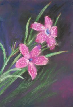 Kucik - Deptford Pink