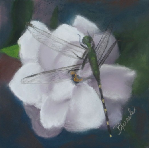 Kucik2019Dragon Fly